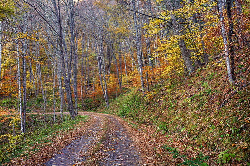 Mary Ann 39 S View Balsam Mountain Road