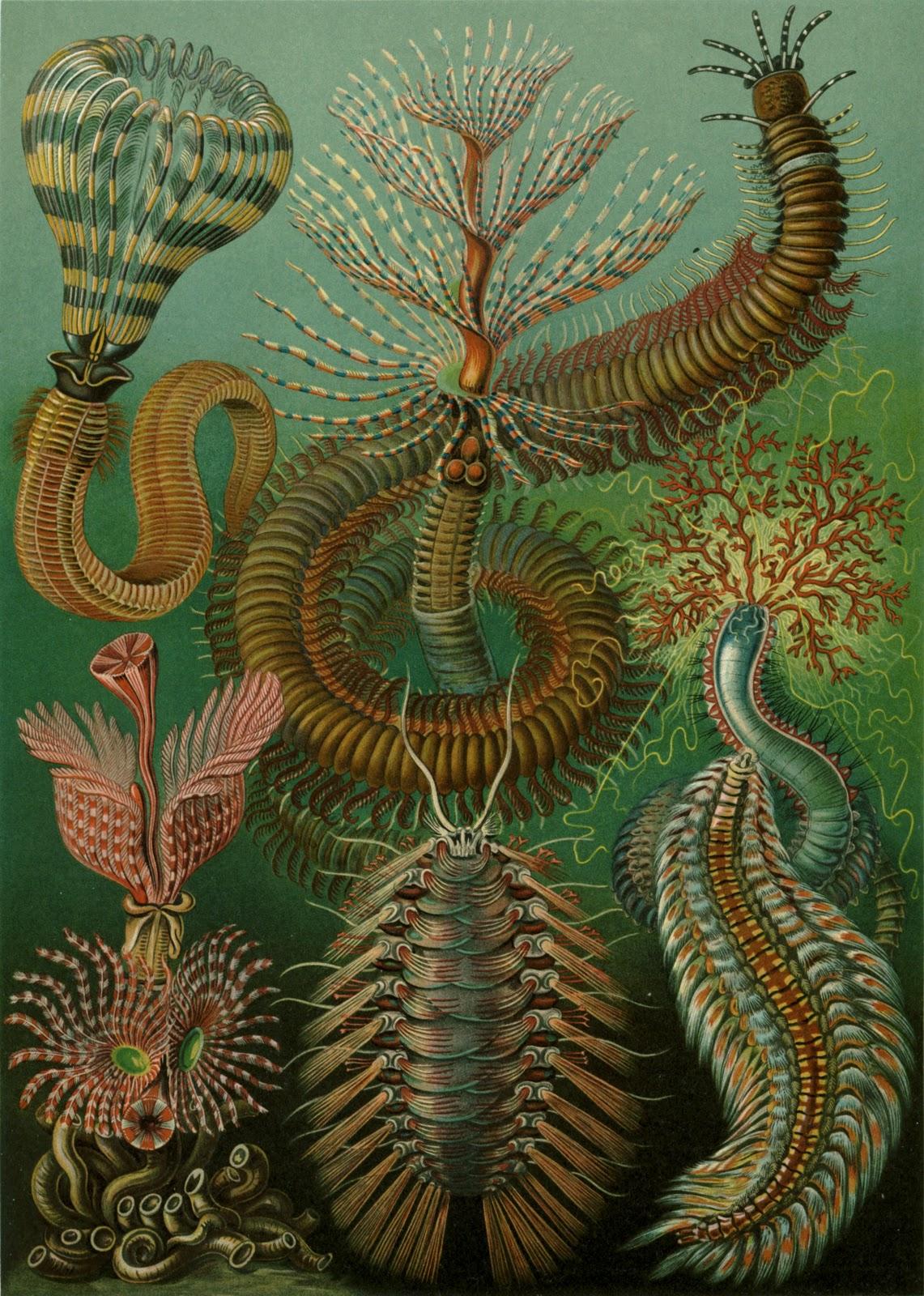 Reggaepsyc Ernst Haeckel
