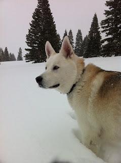 Oslo-in-the-snow