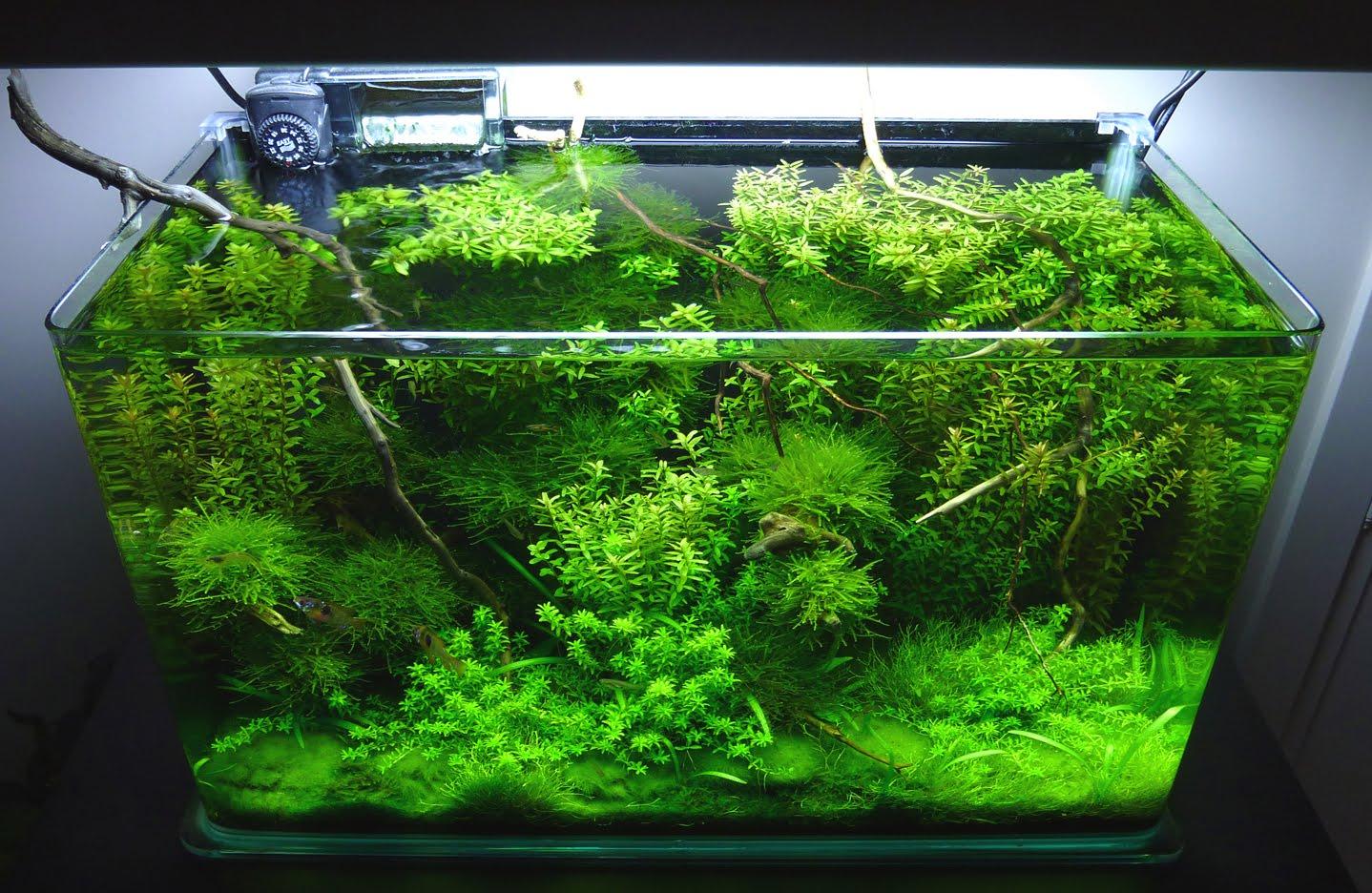 mantenimiento de gran interés como temperatura plantación poda algas