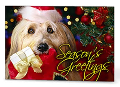 GotPrint season's greetings postcard with dog and present in front of christmas tree