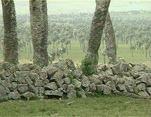 http://2.bp.blogspot.com/_wWtMILOW7iE/S-BM3-rYCFI/AAAAAAAAALE/SgAODW3fkoM/s1600/Corral_de_palmas+e+piedra+camino+de+los+indios_Majol+-+c.jpg