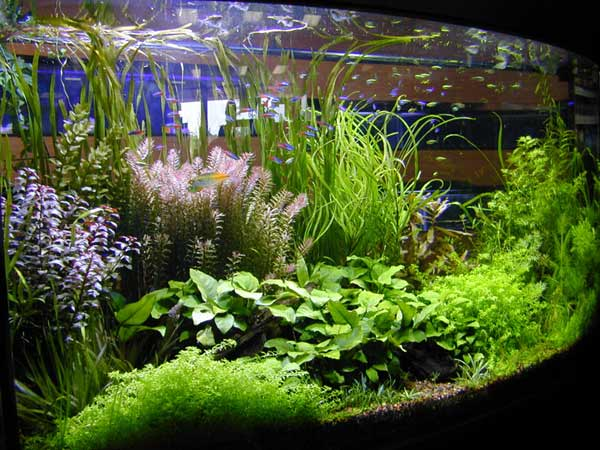 petland aquatics aquatic plants