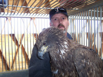 Rescued Bald Eagle is Recovering