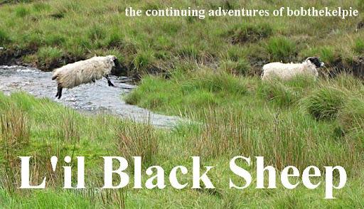 L'il Black Sheep
