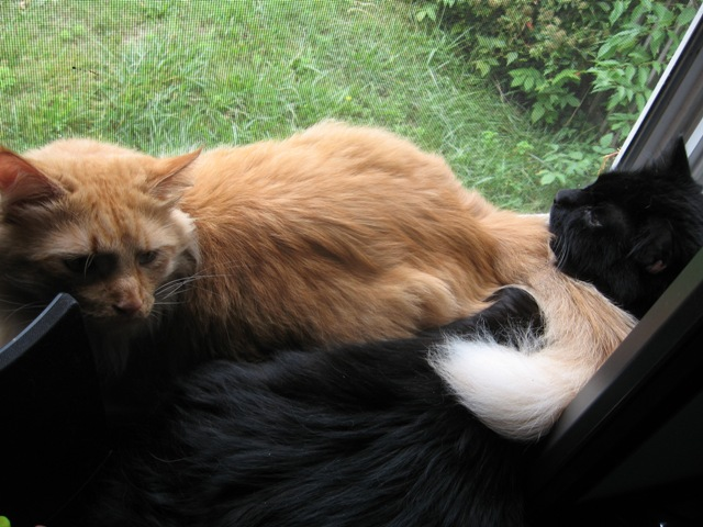 [cats+together.jpg]
