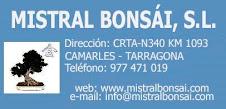 MISTRAL BONSÁI