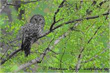 Wildlifetours ( POLONIA )