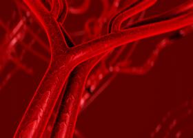 acido urico en sangre en perros dieta acido urico frutos secos