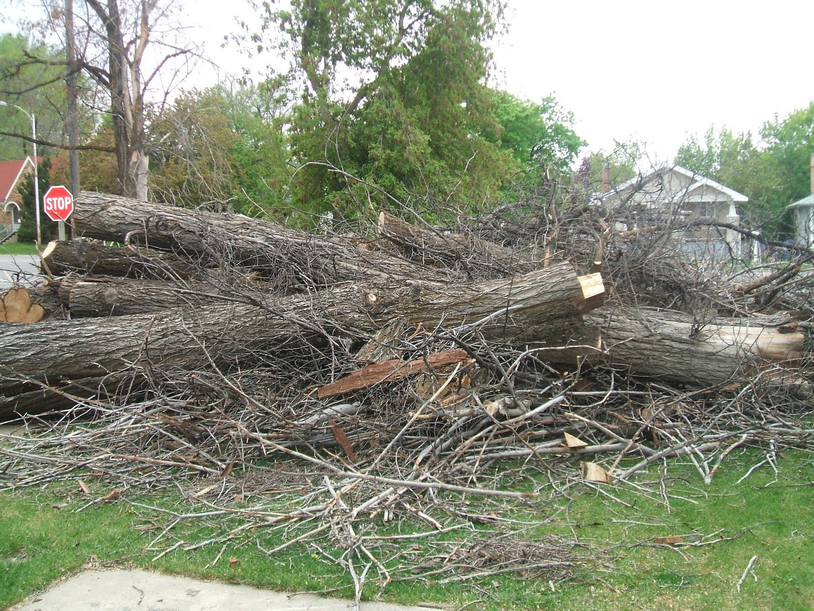 "cutting down trees Cutting the branch too 44 comments on ""how to trim large tree branches always cut outside the branch bark ridge and angle your cut down and away from the."