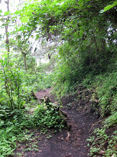 Forest track - Volcan Pacaya