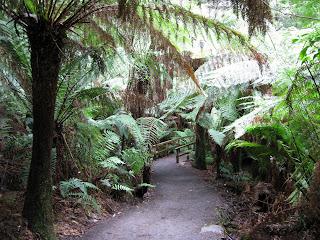 Maits Rest Rainforest Walk - Great Otway National Park