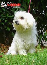 Alguns dos nossos cães e clientes: