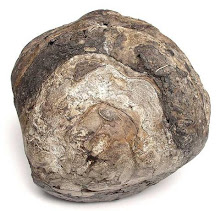 Ambergris Raw