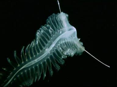 Ekosistem Laut Dalam Deep Sea Yang Menakjubkan Eduprisma