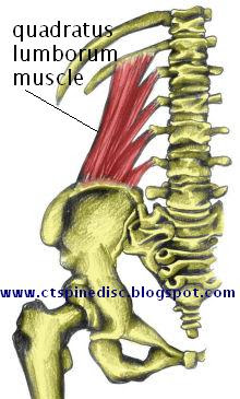quadratus lumborum is one muscle is one muscle that can be the cause of lower back pain