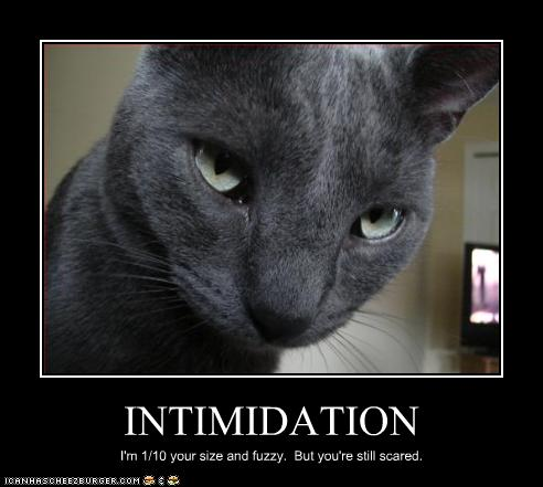 funny-pictures-cat-is-intimidating.jpg