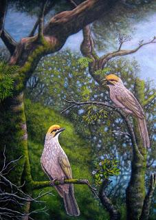 Burung Cucak Rowo (2009)