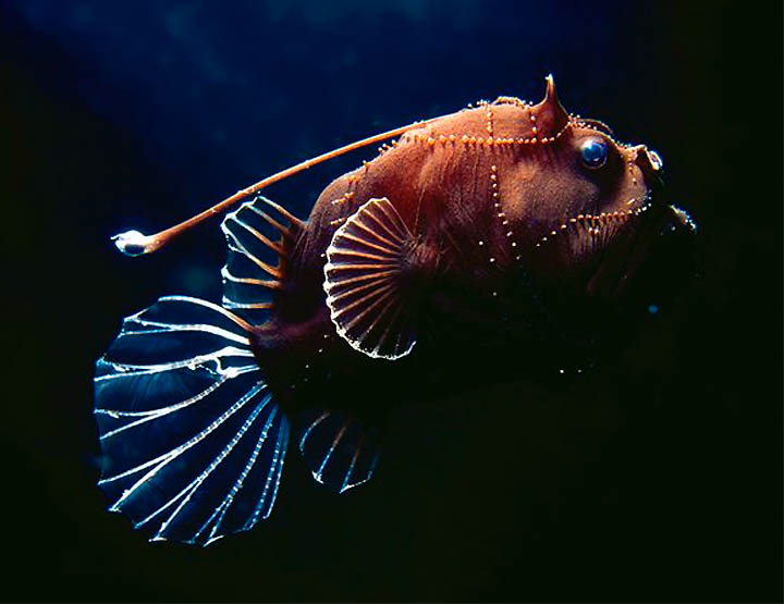Strange and ugly monstrous fish unusual things for Weird deep sea fish