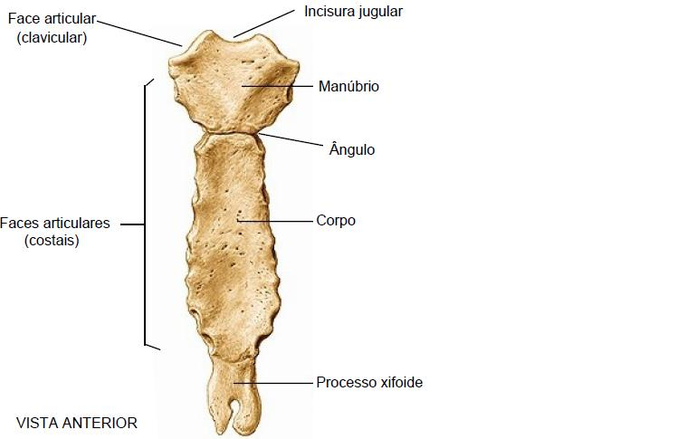 biomedicina osteologia