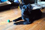 Zwierzęta do adopcji - Nero