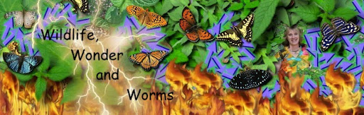 Wildlife, Wonder and Worms