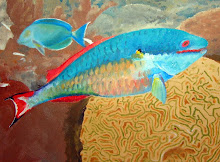 Redstripe Parrotfish