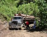 Desforestación