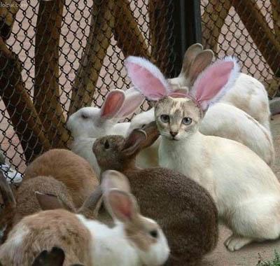 easter bunny cartoon clip art. cartoon easter eggs