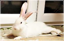 Kubuś, pieso-królik:)
