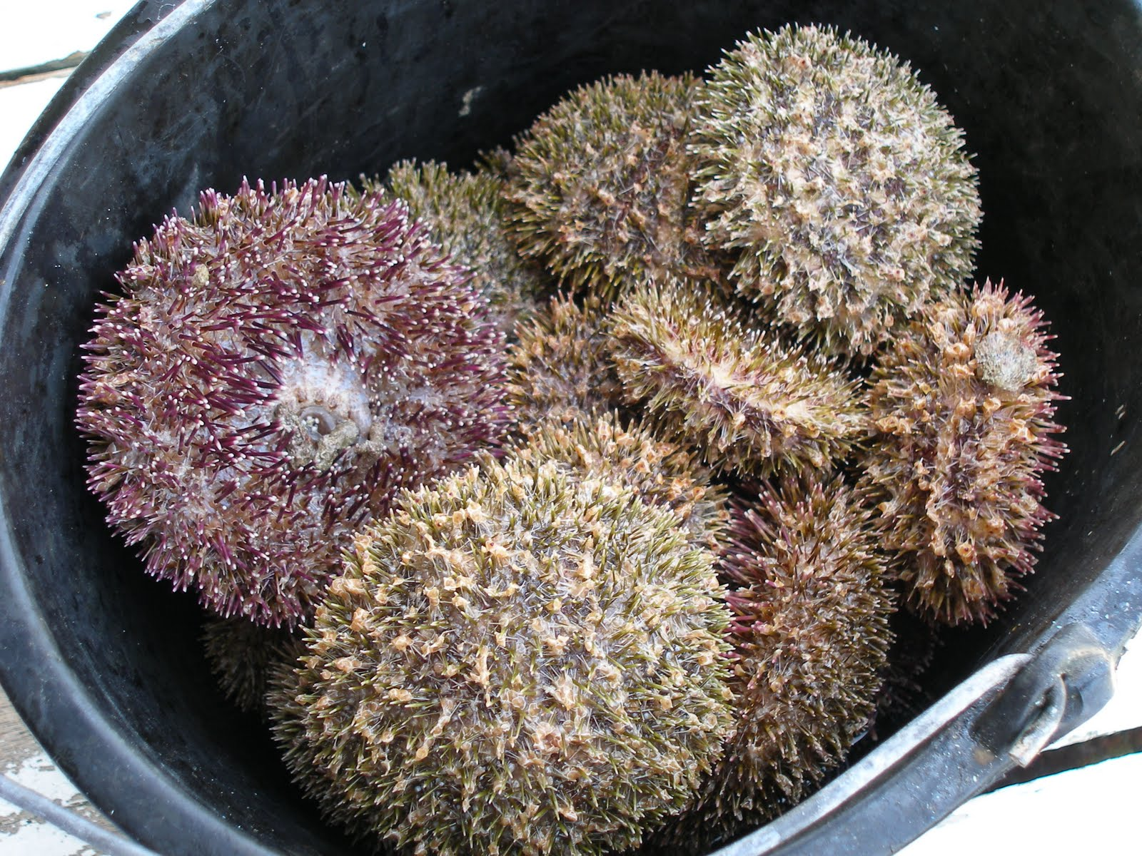 davao, city, samal, island, white, sand, beach, garden, diving, vanishing, blue, water, sea, urchin, mindanao, philippines