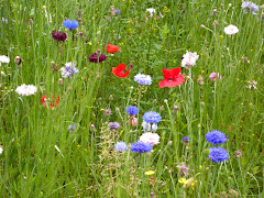 flore et faune, sur le chemin de mes promenades ou dans mes jardins