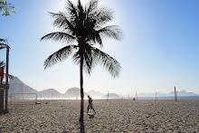 La palmera que cubre el Sol