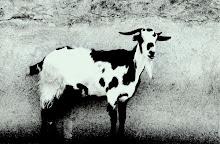 La cabra del sacrificio