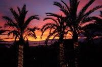 Ls palmeras datileras del desierto