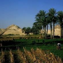 Los cultivos del Nilo