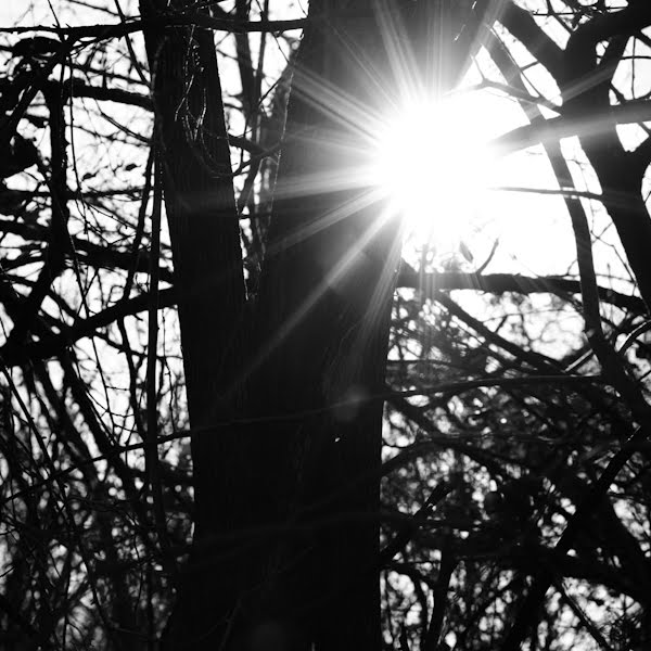 photo of a sunstar through the woods