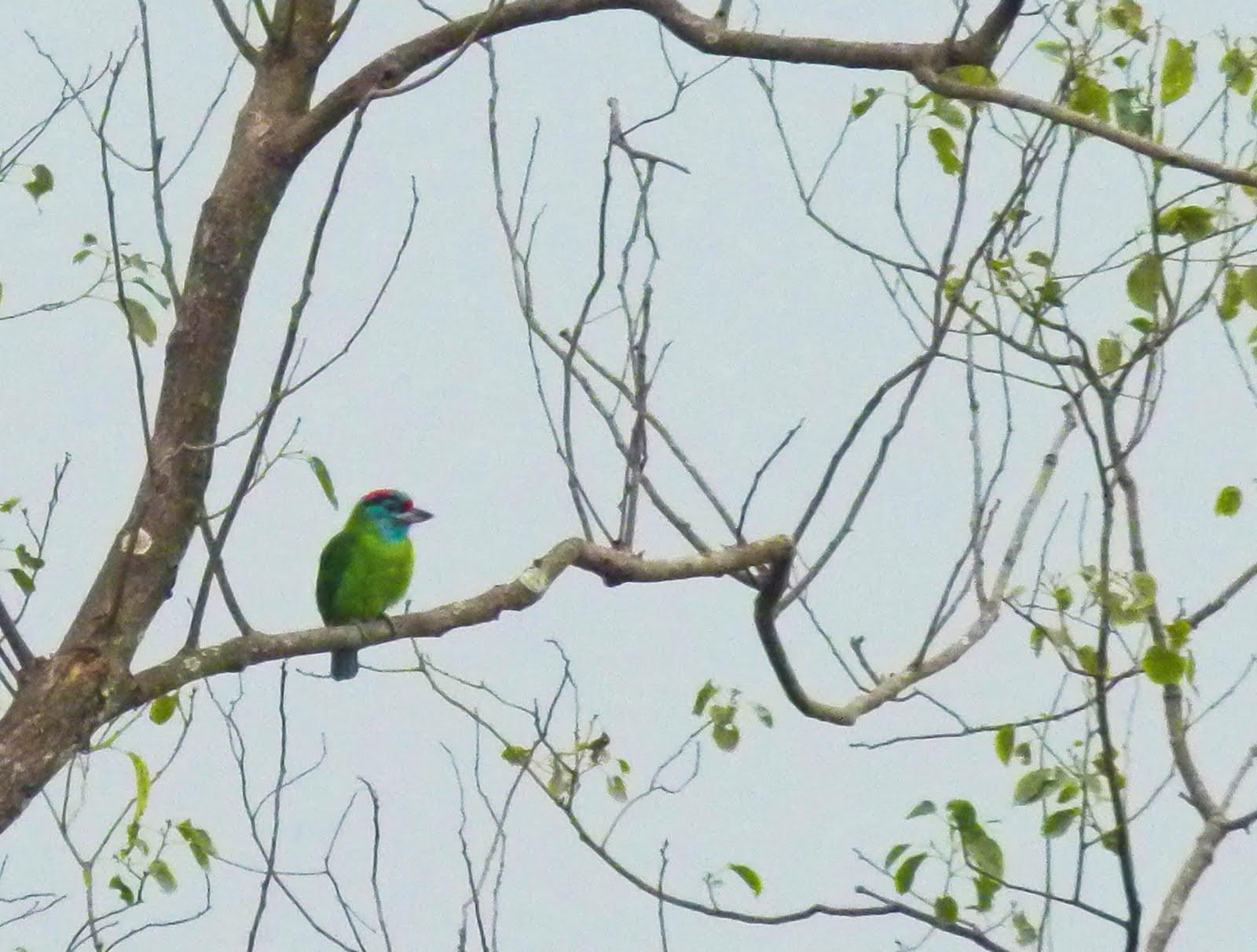 Vietnam Bird News  December 2010