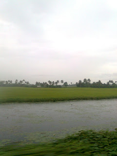 these pictures are taken on Nokia Mobile while traveling from changanassery kottayam kerala to alappuzha on a rainy day- find coconut trees on paddy fields, small water passing along with road, house boats parking and resting at nedumudy alappuzha, famous also for nedumudi venu, a great actor in Malayalam film industry and some pictures are taken at thoppumpady ernakulam where fishing boats parking