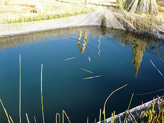Trout pond on Uros island