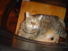 Berkley Bobcat