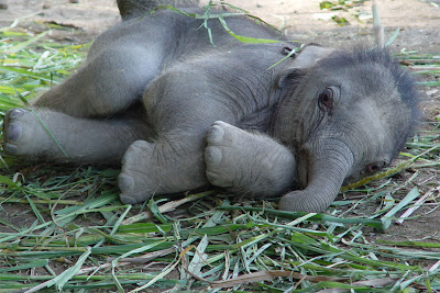 Fiona Bernard: All Babies Are Cute.