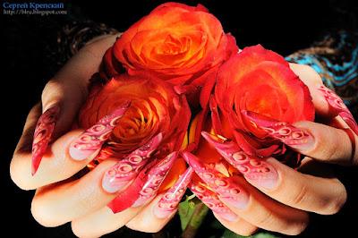 Цветы, Студия, Роза, Ногти