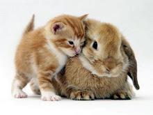 Coelhos e Gatos