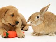 Cão e coelho