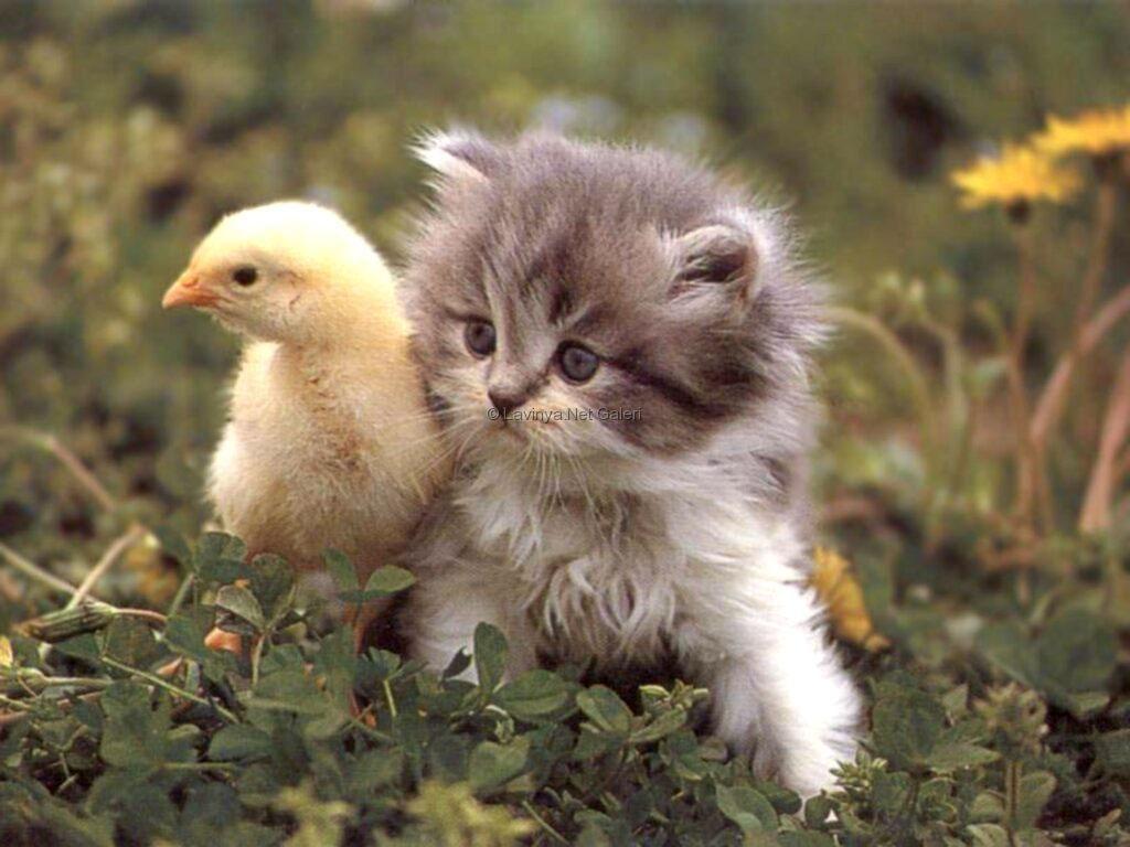Sevimli hayvanlar tatlı hayvan resimleri