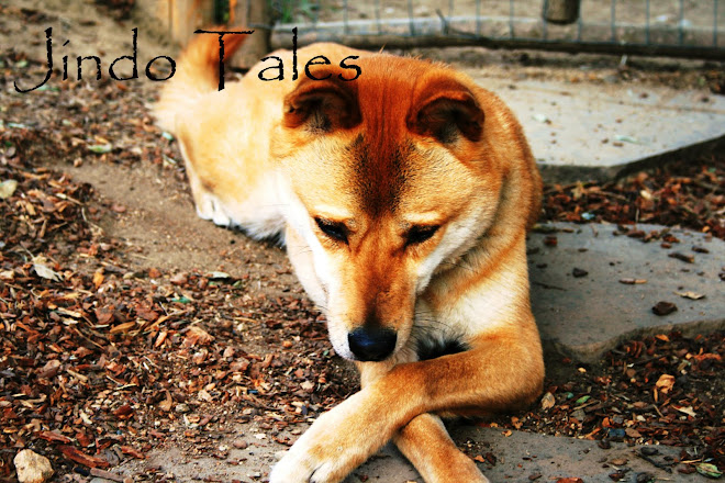 Jindo Tales