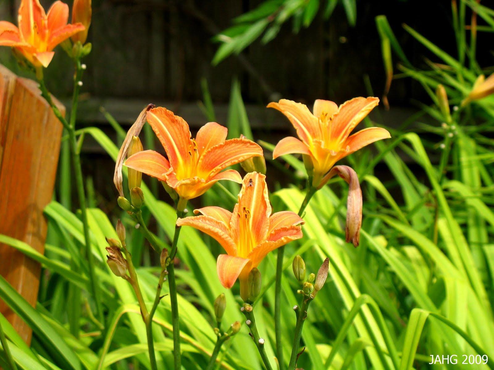 Recherche nom plante plantes du jardin et de la maison for Recherche plante