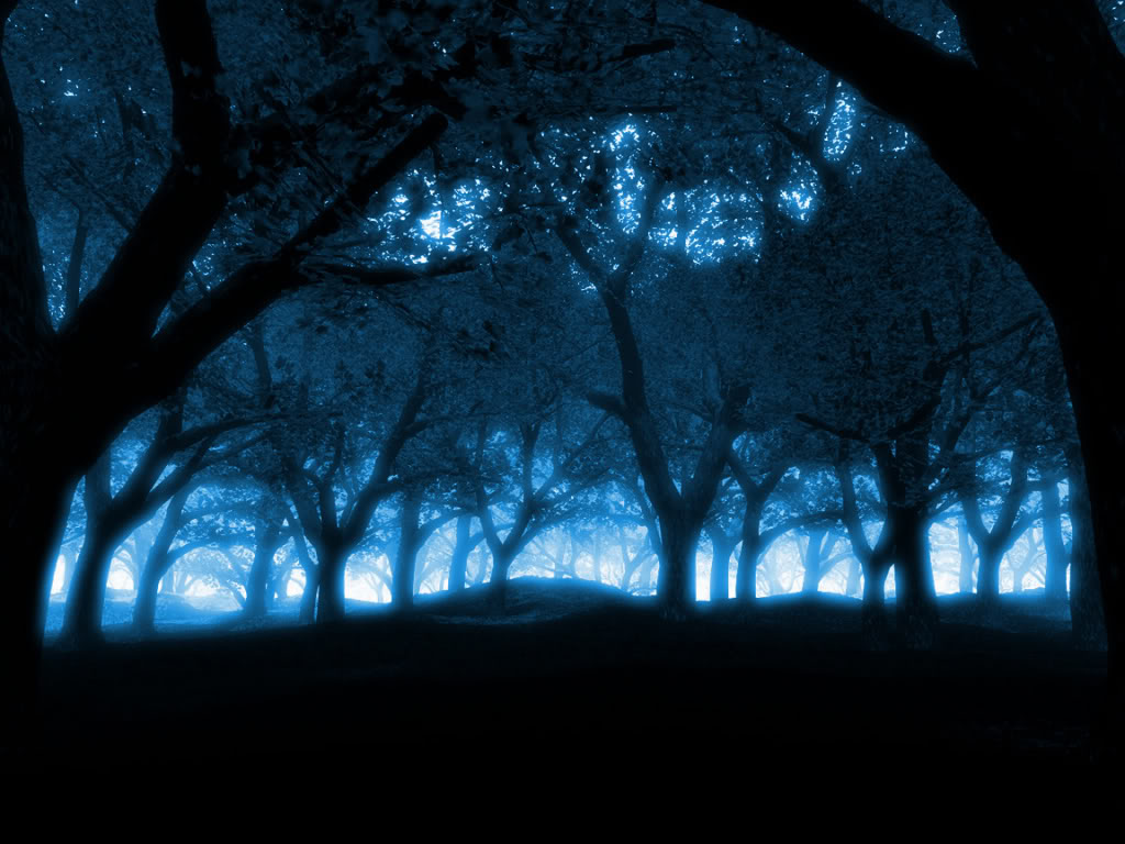 Dark Forests at Night