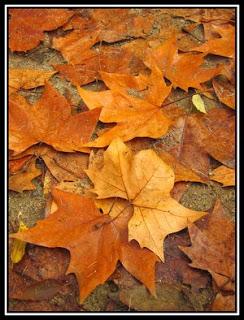 Douradas folhas de Outono